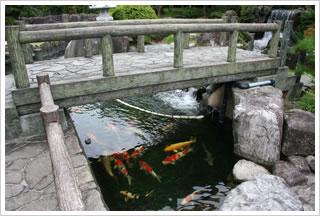 池イメージ